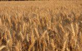 Compag sull'agricoltura e il grano duro