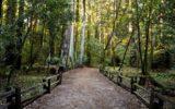 Comparto forestale in Campania: nuovi decreti