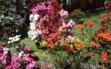 Con Arezzo in fiore si festeggia la primavera