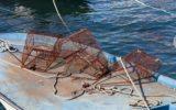 La conservazione delle risorse della pesca