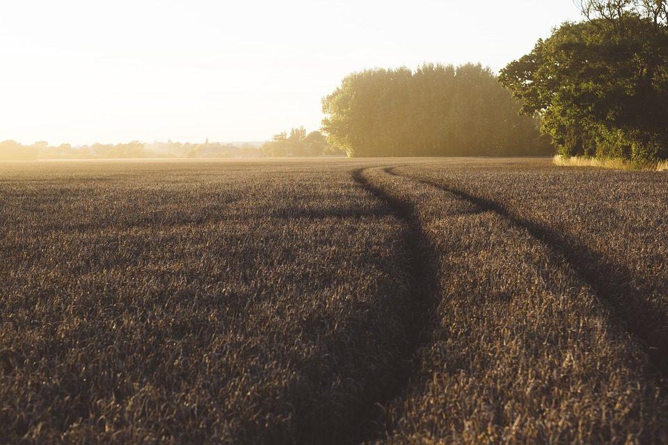 Consumi: taglio dei prezzi nell'agricoltura