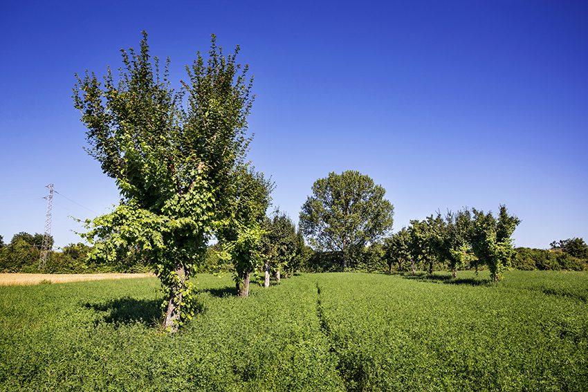 Cresce il Consorzio Tutela Vini Montefalco: si aggiunge la denominazione Spoleto Doc