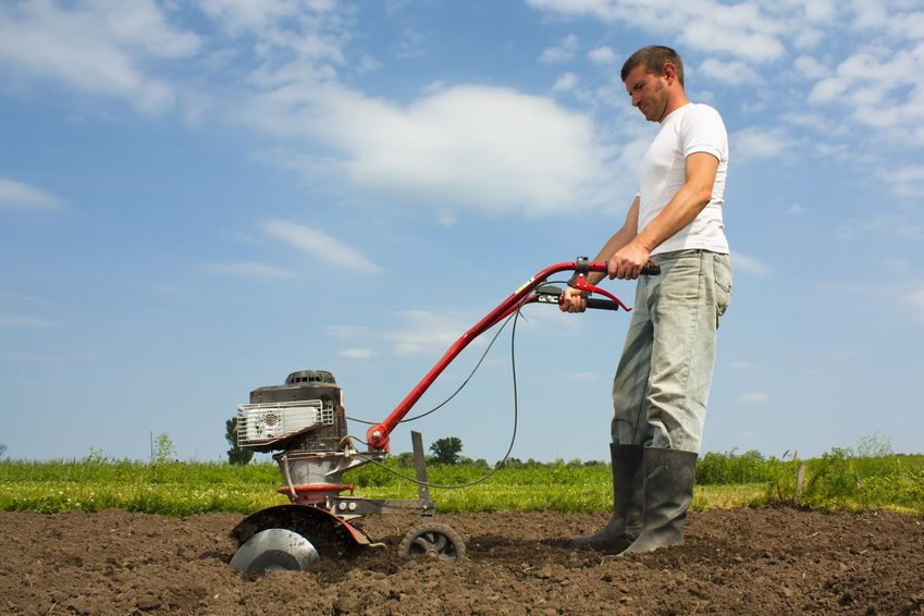 Cresce l'occupazione nell'agricoltura italiana