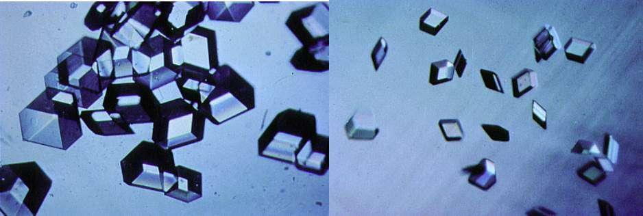 Cristallizzazione a membrana