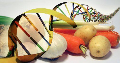 Crollo dei terreni seminati con organismi geneticamente modificati