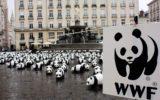 Educazione ambientale nelle scuole: i progetti WWF
