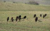 Emergenza fauna selvatica