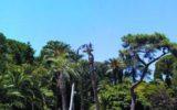 Fermiamo la strage delle palme!