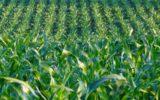 Finta primavera: i rischi per le colture