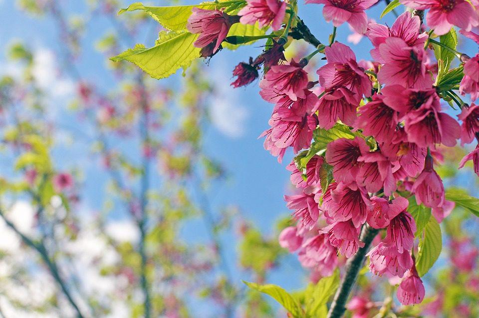 Flower-Boom