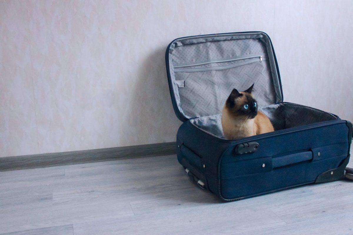 Gatti in vacanza: valigie pronte per il 50% dei felini