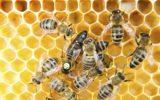 Giornata mondiale delle api: la campagna Slow bees