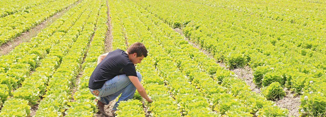 Giovani in agricoltura: Italia primo Paese in Europa