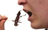 Gli insetti a tavola interessano all'8% degli italiani