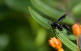 Gli italiani e la paura per gli insetti nei paesi esotici