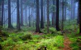 Gli olii essenziali e tutti i benefici della foresta