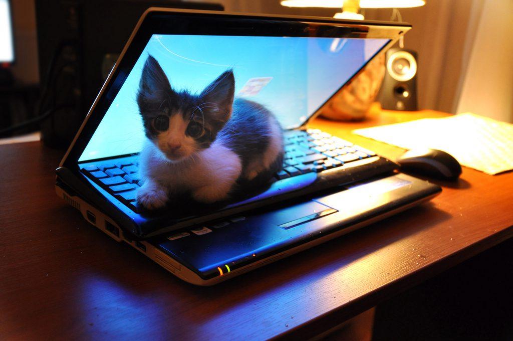 Guardare gatti su internet aumenta l'energia. Lo dice uno studio