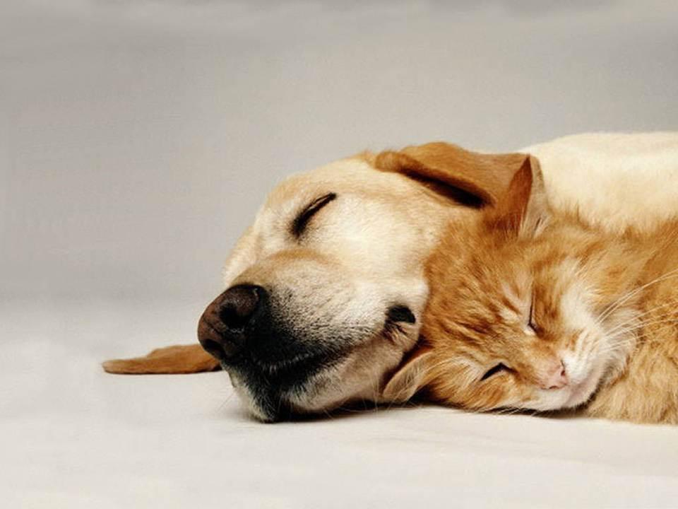 I cani e i gatti di oggi vivono il doppio rispetto a un secolo fa