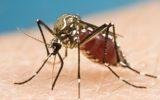 I casi di Zika in UE