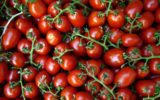 I pomodori proteggono la nostra prostata
