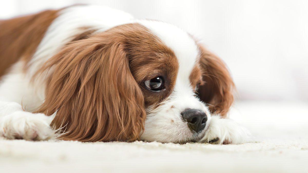 I pro e i contro di avere un animale domestico