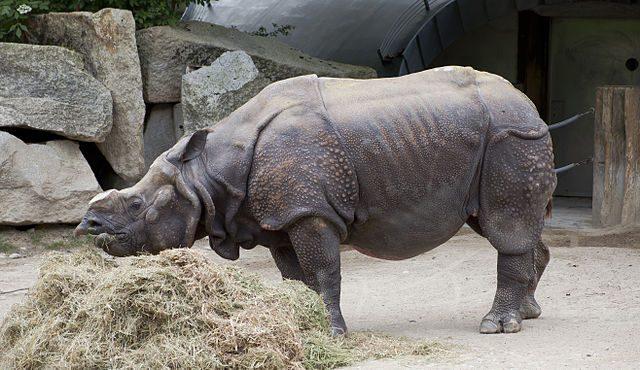 I rinoceronti trovano una seconda casa
