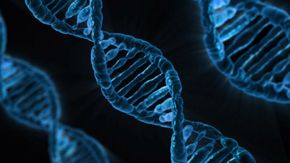 Idrocefalo: scoperta causa molecolare