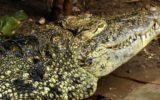 Il feeding time dello zoo di Napoli