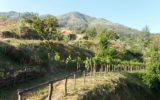 Il maggio dei vini vesuviani