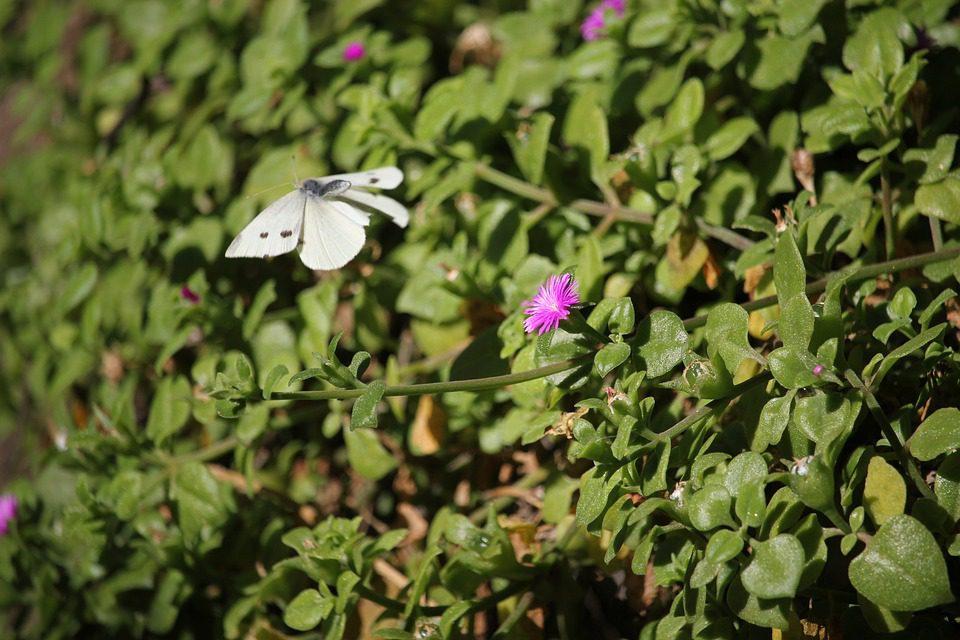 Il meeting della biodiversità a Cancun