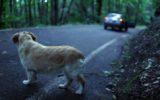 Il Ministero della Salute contro l'abbandono degli animali