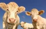 Il rapporto tra il consumo di carne e il Gas Serra