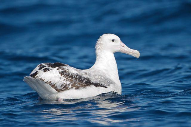 Il volo dell'albatros