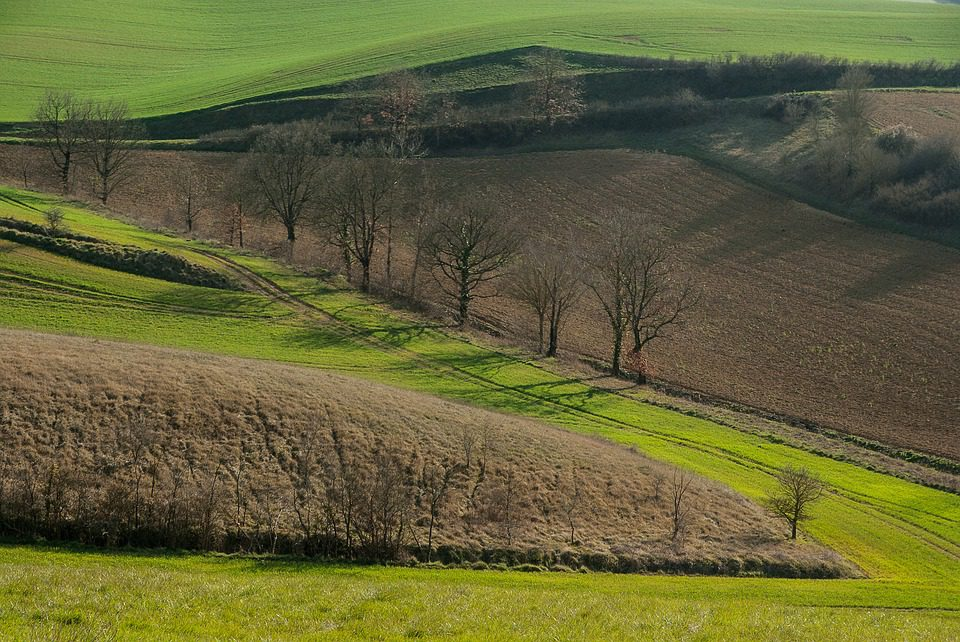 In decrescita la terra coltivabile in Italia