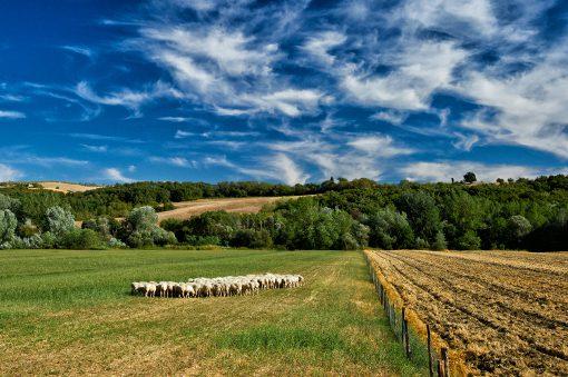 In Italia l'agricoltura più green d'Europa