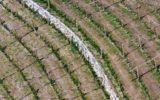 In Italia la terra costa di più