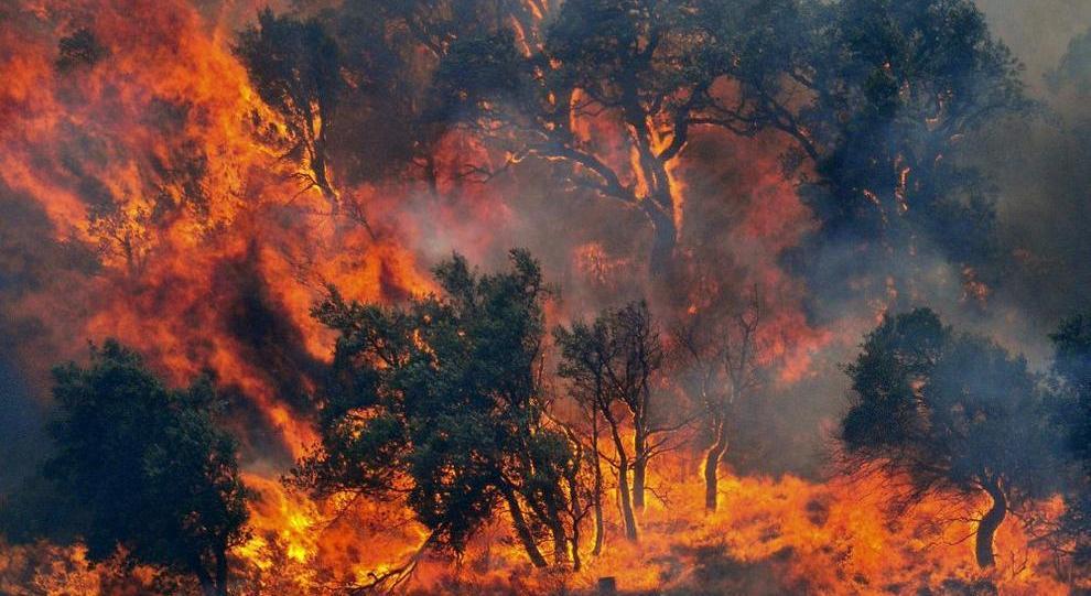 Incendi: l'allarme più alto di sempre