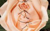 INFIBULAZIONE: LA PRATICA ANCESTRALE E LA MEDICINA