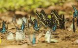 """#IORESTOACASA: Il WWF lancia """"Ecotips"""""""