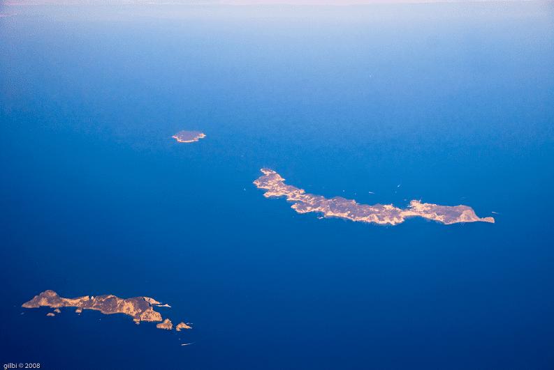 Isole Pontine: scoperta una nuova specie di lucertola