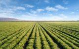Italia: biodiversità agraria e alimentare tutelata per legge