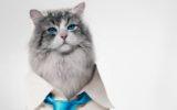 """Kevin Spacey diventerà un gatto in """"Nine Lives"""""""