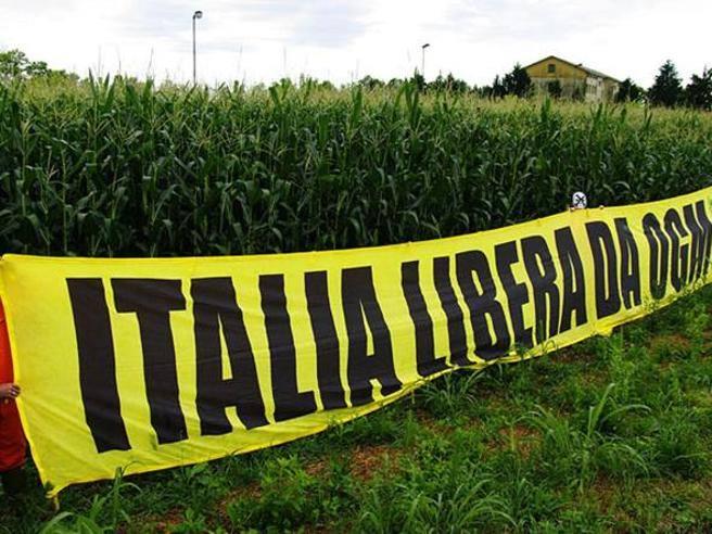 L'80% degli Italiani è d'accordo con la richiesta di bandire gli OGM