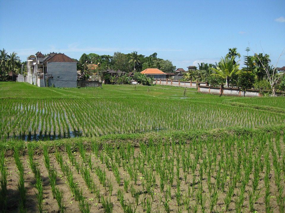 L'agricoltura è il settore dove cresce di più
