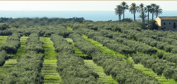 L'agricoltura italiana è la più verde d'Europa