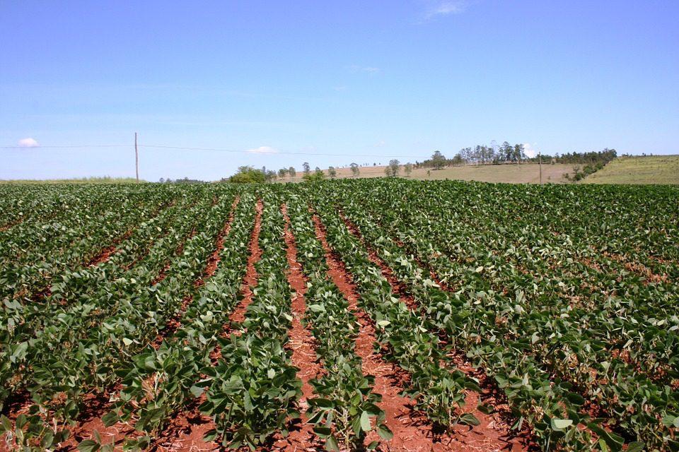 L'agricoltura salva la crescita