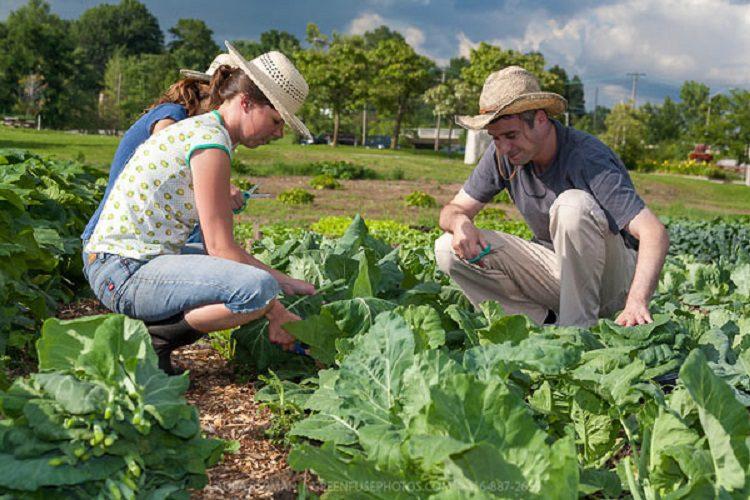 L'agricoltura spinge all'occupazione