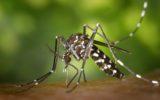 L'albero evolutivo dello Zika