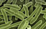 L'arma segreta dei batteri