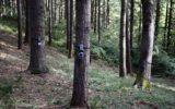 L'arrivo delle foreste 4.0